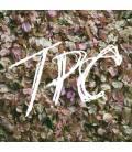 TPC (1 LP)