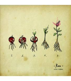 Rosa (1 LP)